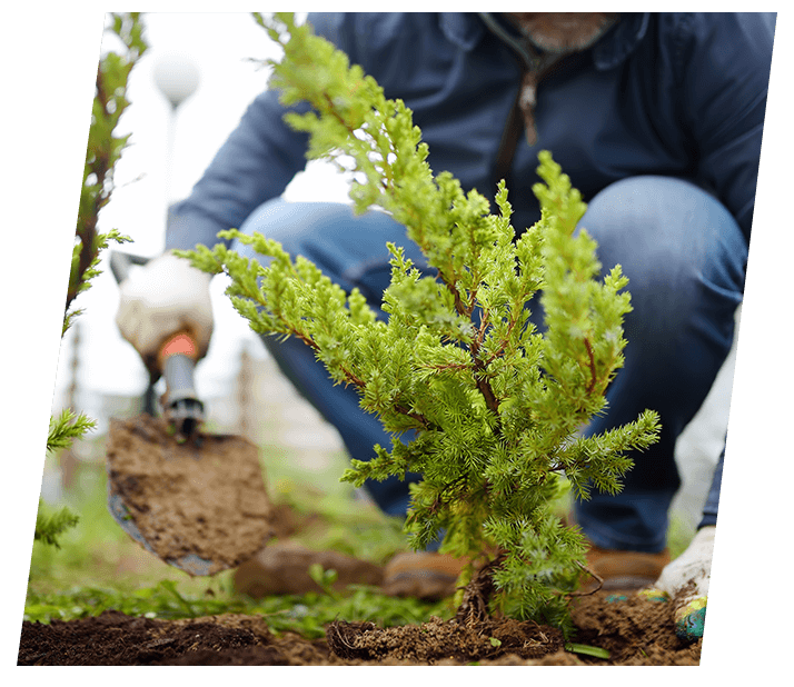 Planting trees to help the climate